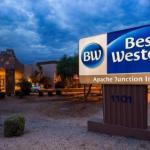 Stray Cat Hotels - Best Western Apache Junction Inn