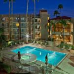 Stray Cat Accommodation - Best Western Plus Scottsdale Thunderbird Suites
