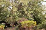 Banjul Gambia Hotels - Yuna Village Garden Resort