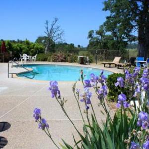 Amador County Fair Hotels - Shenandoah Inn