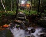 Cape Tribulation Australia Hotels - Daintree Cascades