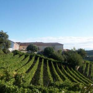 Book Now Agriturismo Finestre di Langa (Trezzo Tinella, Italy). Rooms Available for all budgets. Surrounded by the vineyards on the Langhe hills Agriturismo Finestre di Langa offers country-style rooms with free Wi-Fi. Located in Trezzo Tinella this working farm produces