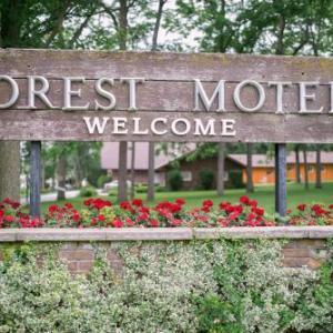 Forest Motel & Woodland Retreat