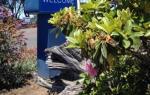 Fort Bragg California Hotels - Seabird Lodge A Signature Inn