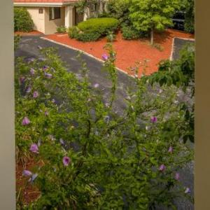 Hotels near Boston College - Hotel Boston