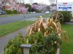 Invercargill New Zealand Hotels - Heritage Court Motel