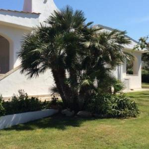 Book Now Villa sul mare Rosa Marina (Rosa Marina, Italy). Rooms Available for all budgets. Villa sul mare Rosa Marina is a villa set in Rosa Marina 27 km from Alberobello. The property is 10 km from Ostuni and free private parking is provided.The villa is composed o