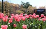 Fairfax Virginia Hotels - Comfort Inn University Center