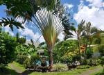 Manihi French Polynesia Hotels - Pension De La Plage