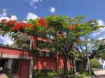 San Luis Talpa El Salvador Hotels - Hotel Arbol De Fuego