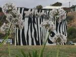 Geraldton Australia Hotels - Zebras Guest House Geraldton
