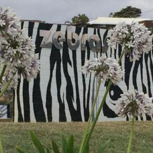 Zebras Guesthouse