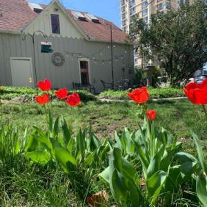 Hotels near The Complex Springfield - Walnut Street Inn