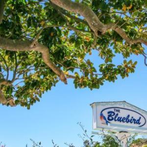 Bluebird Inn
