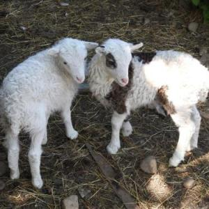 Tyncellar Farm holiday cottages