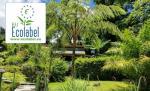 Roseau Dominica Hotels - Les Bananes Vertes