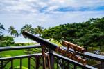 Waianae Hawaii Hotels - Luxury Retreat Hawaii