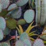 Ojai Rancho Inn